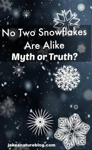 snowflakes unique