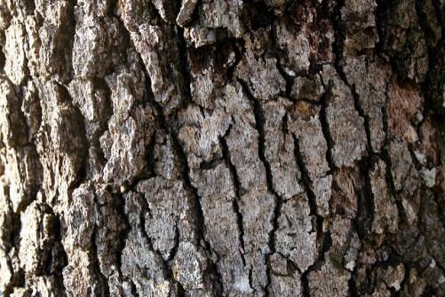 winter tree identification
