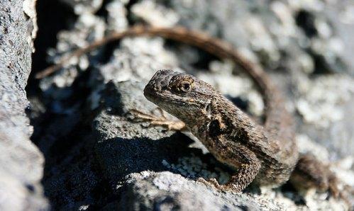 lizards in winter