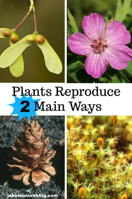 plants-reproduce-pin blog jakes fun facts about nature Nature nature fact plants reproduction trees wildflowers