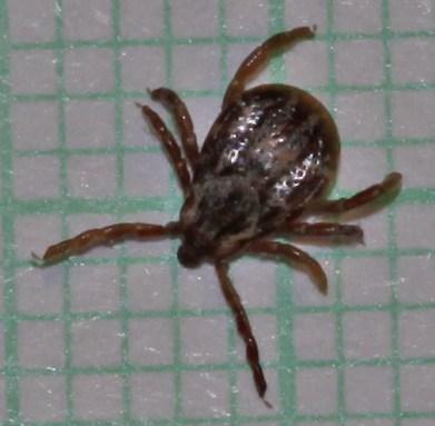 common arachnids