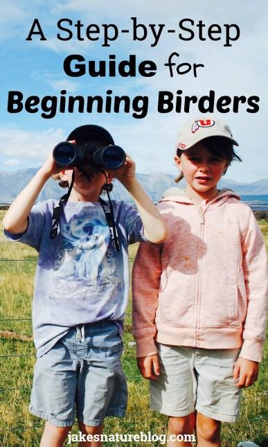 beginning birders