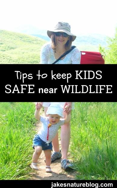 kid safety wildlife pin