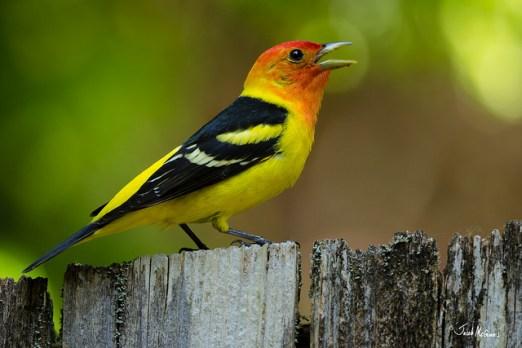 bird courtship