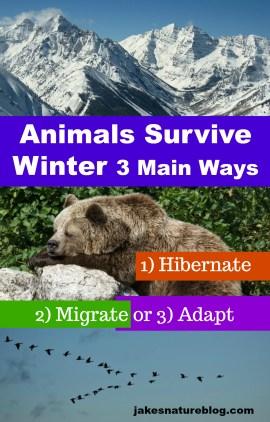 survive-winter-pin-2 adapt animals blog hibernation jakes fun facts about nature migration Nature survive winter