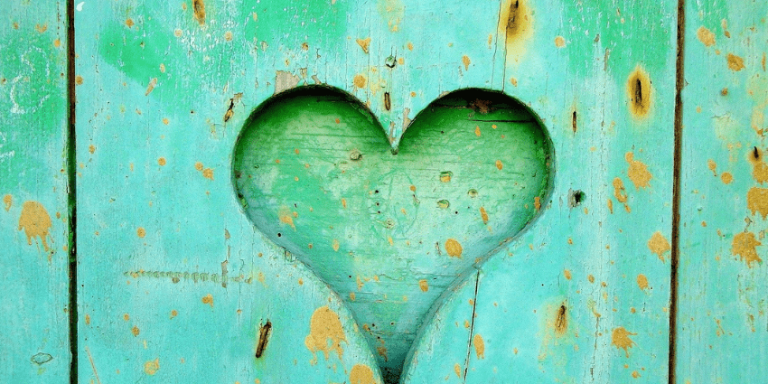 Heart carved into green wood.