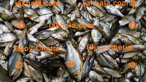 Local freshwater fishes of pond