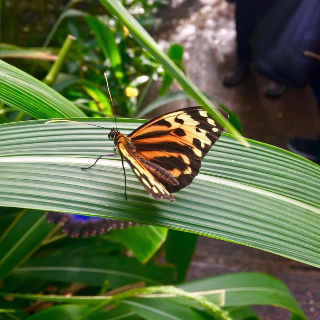 Stratford upon Avon Butterfly Farm