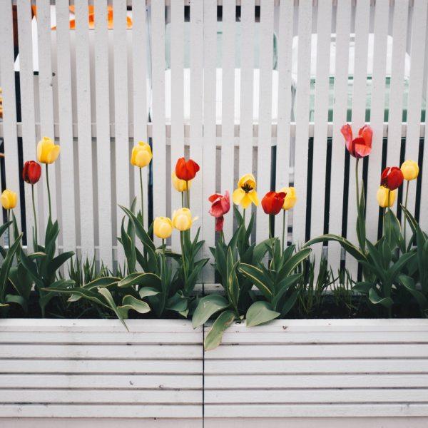 Making a City Garden