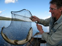 Sture fiskar