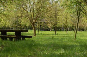Polana ze stołami przy zejściu do Jeziora Góreckiego
