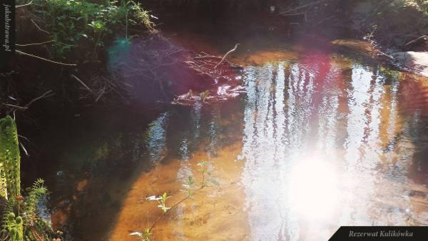 Klarowna woda w strumieniu Kulikówka | Rezerwat Kulikówka