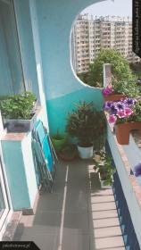 Balkon prawa strona | ogród na balkonie