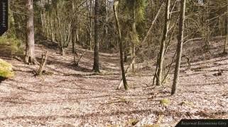 Wąwóz | Rezerwat Krzemienne Góry