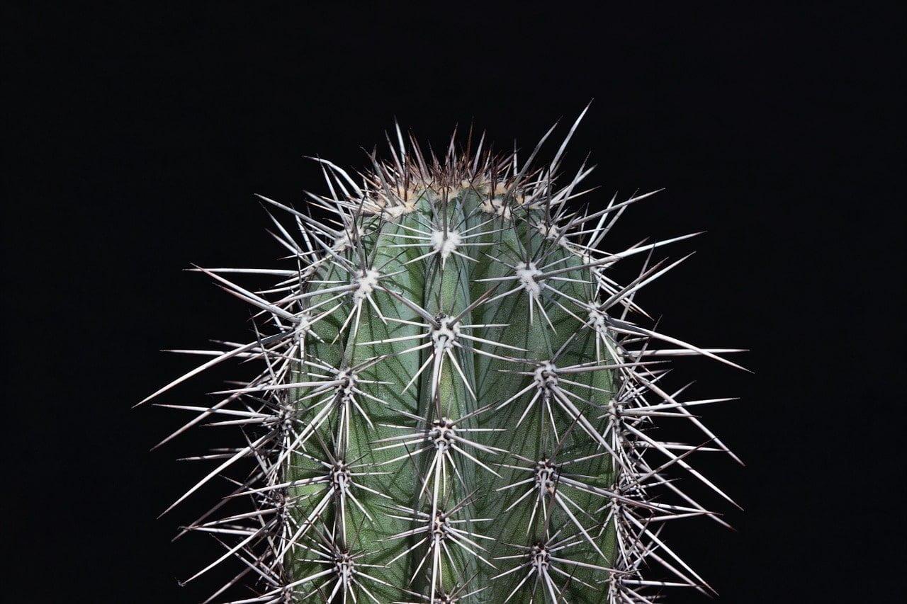 cactus, sting, prickly