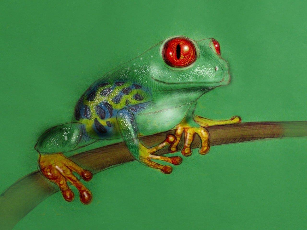 frog, jungle, venomous