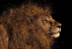 lion, mane, hair