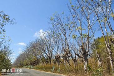 Pohon Kering