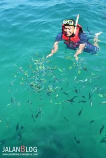 Ikan Matre! baru mau berkumpul setelah di umpan Roti