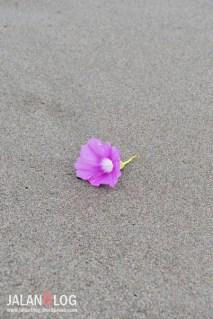 Bunga di pasir