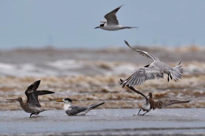 Burung Air di pantai cemara. Foto oleh Iwan Febriyanto (http://www.mongabay.co.id)