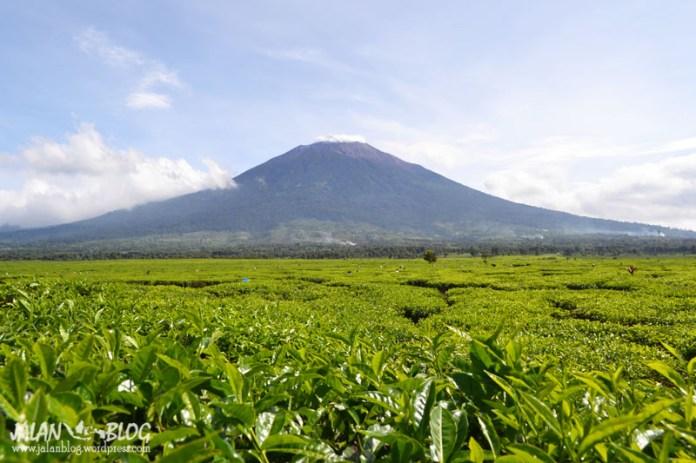 Gunung Kerinci dengan hamparan teh