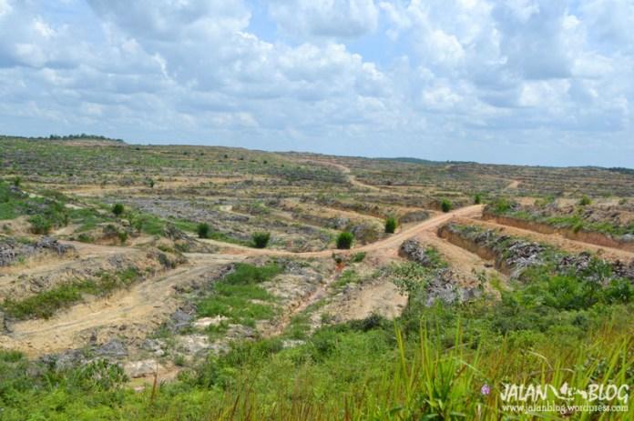 Hutan digunduli demi Sawit