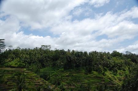 Subak Bali