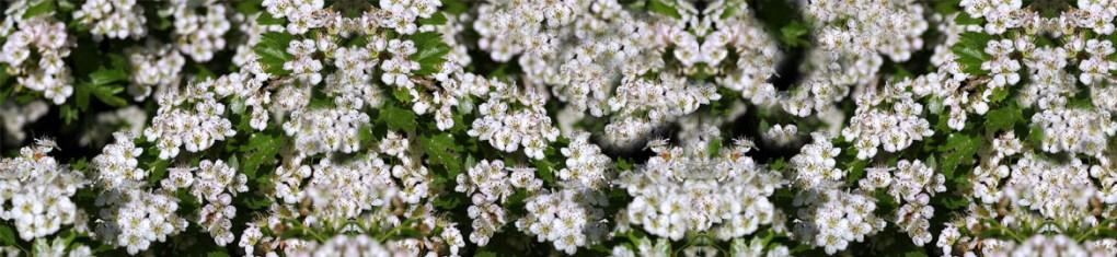 Flora Montana Honey