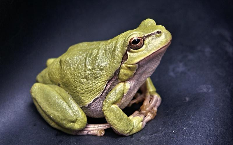Zeitmanagement Eat that frog