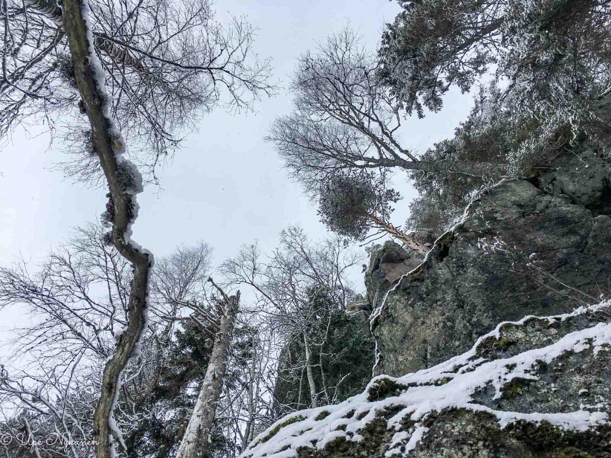 Vuori-Kalajan puita ja kallioinen rinne