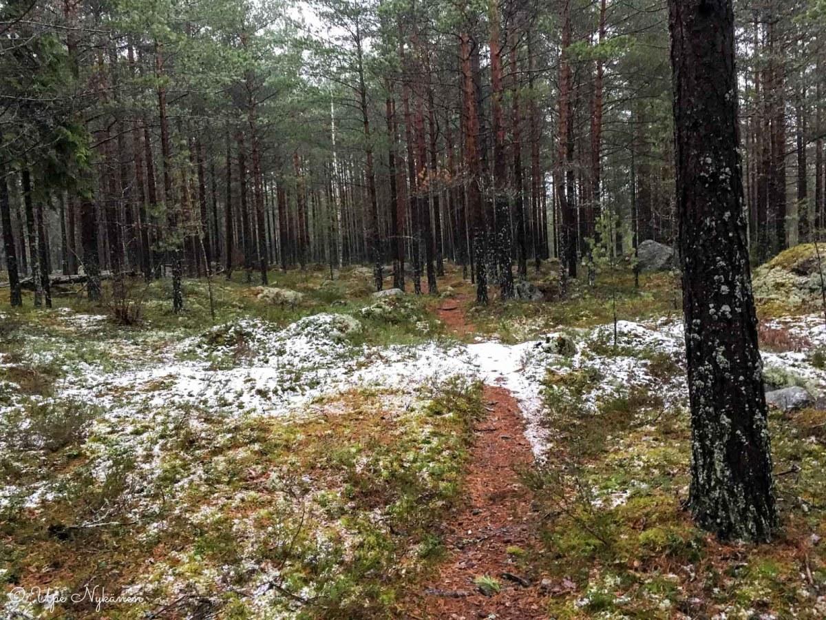 Metsäpolku Dragsvikintien jälkeen