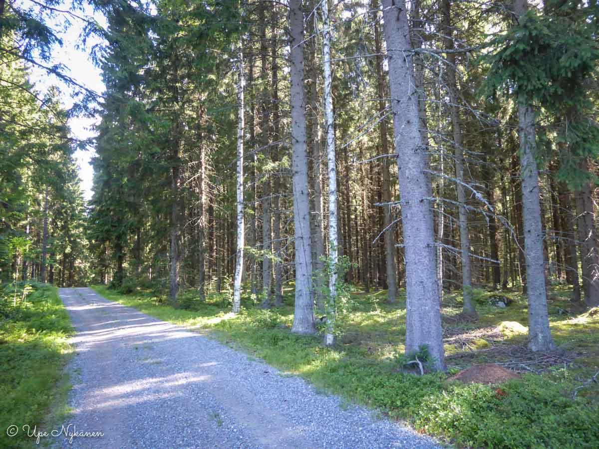 Pikkutie keskellä metsää.