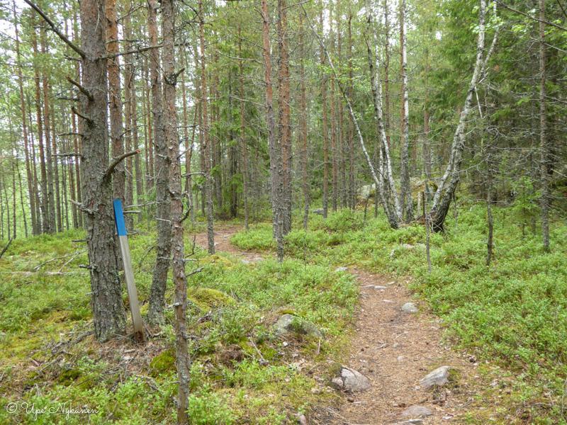 Seitsemän veljeksen reitin metsäpolkua Hyvinkään puolella.