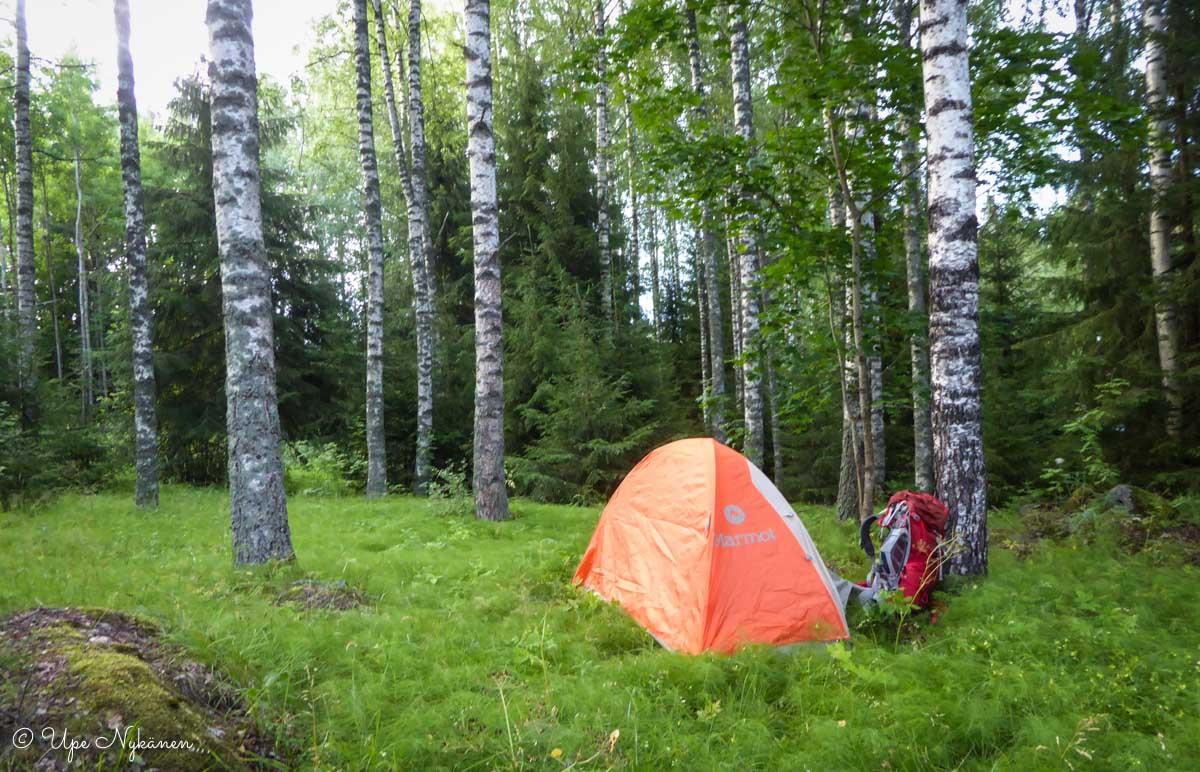 Teltta koivikossa Lammilla.