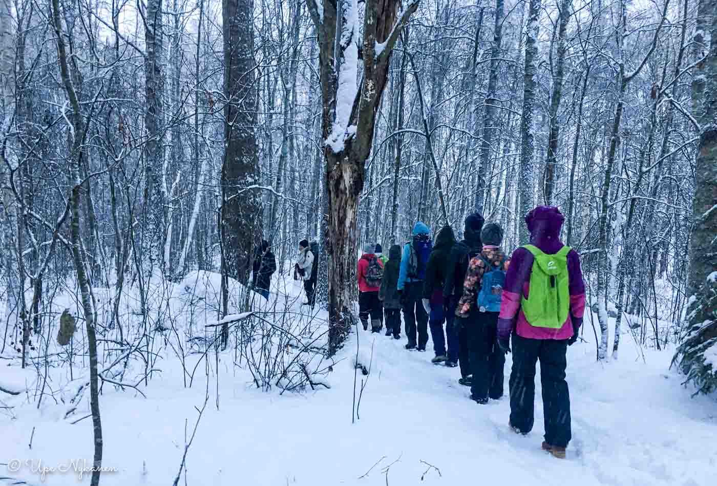 Metsämielikävelyllä Haukanniemessä.