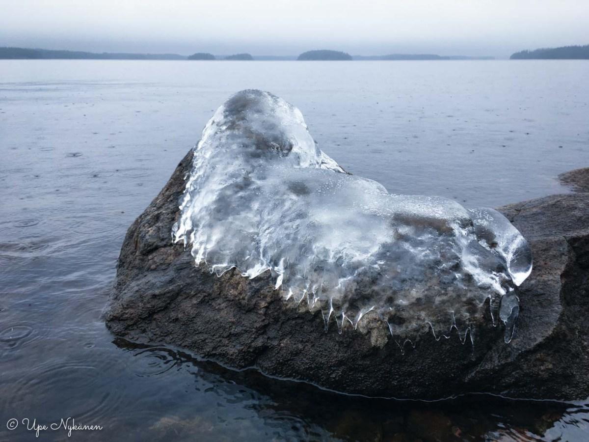 Hylkeen muotoinen jäämuodostelma rantakiven päällä, Lammassaari.