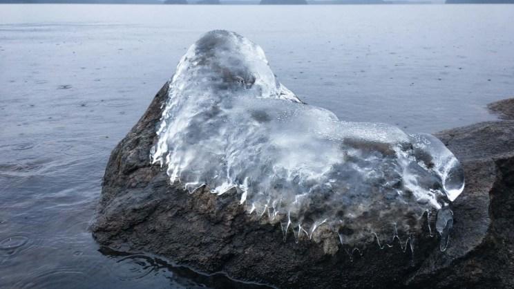 Hylkeen muotoinen jäämuodostelma rantakiven päällä.