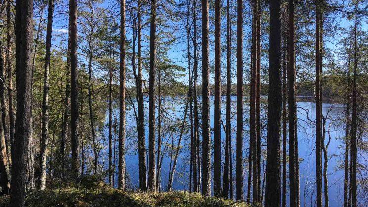 Iso Kotajärvi, Peuran polku