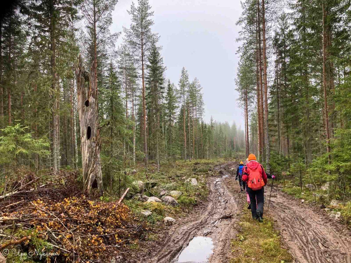 Halloween Hike -reitti ja kävelijöitä mutaisella metsäkoneuralla.