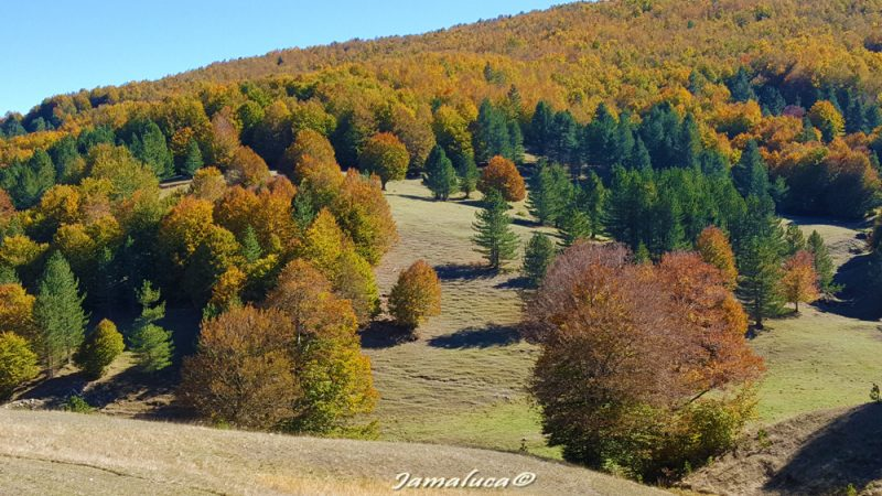 Il foliage nel Parco Nazionale della Sila
