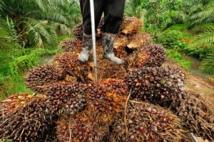 Palm Kernel Oil Business Plan Free PDF Download (UPDATED)
