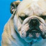 犬 死亡リスク低下 ペット