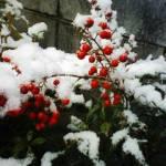 フォトジェニックな雪景色