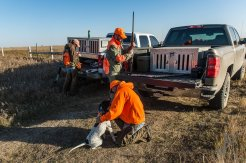 Eric Orsburn checks one of the dogs before loading it in the truck towards the end of our first day of pheasant hunting.