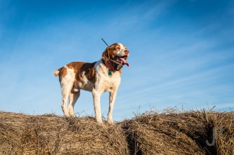 Norm Lippert's dog poses for a photo on a hay bale.