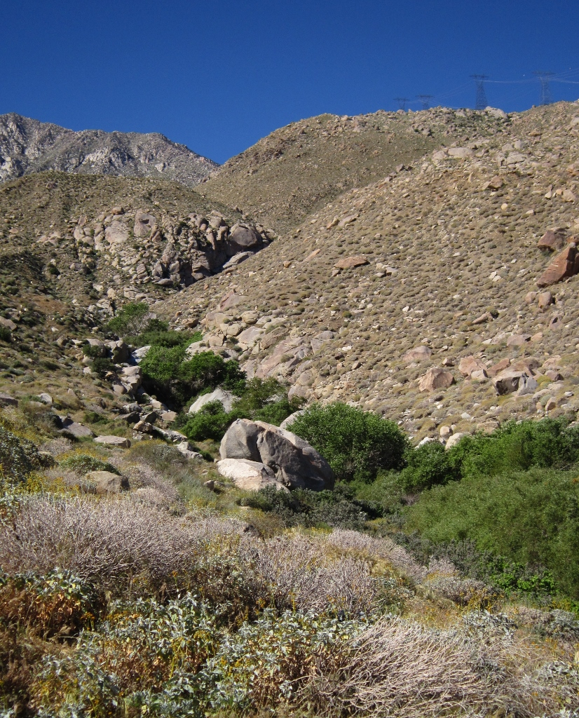 Riparian habitat along Lamb's Creek