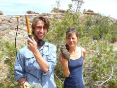 Searching for quail nests with radio-telemetry