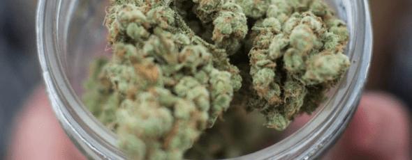 Cannabis James Alexander Michie