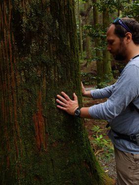 Cedar trees of Kyushu